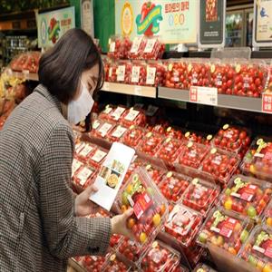 토마토,이마트,매장,특징,품종
