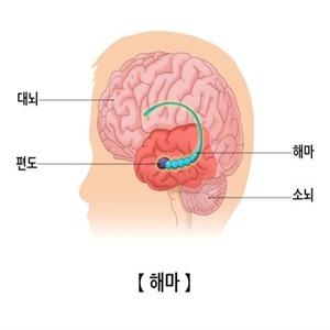 기억력,운동,노인,그룹