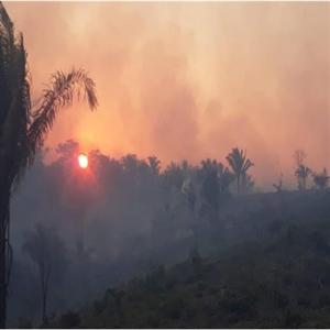 브라질,정부,투자,대한,아마존,파괴,유럽