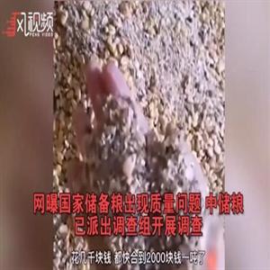 옥수수,영상,식량,중국,우려,불량,식량안보,창고,헤이룽장성,비판