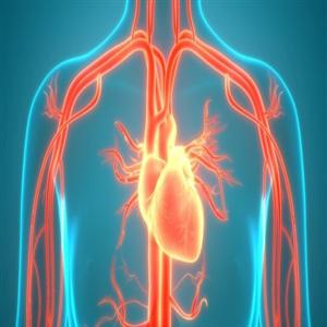 심방세동,건강,성인,음주,사람