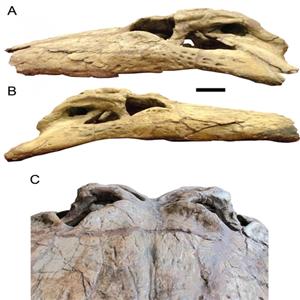 공룡,데이노수쿠스,악어,크기