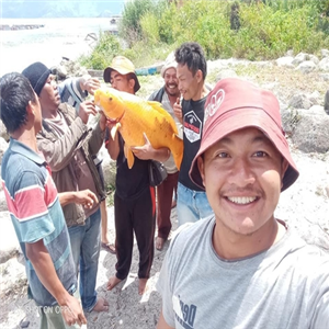 토바호수,금붕어,인도네시아