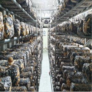동명대,버섯,융합,스마트팜,재배,대학