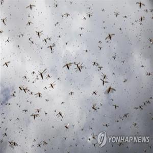 메뚜기,메뚜기떼,페로몬,4VA,연구팀
