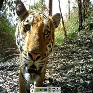 공원,카메라,호랑이,국립공원,태국