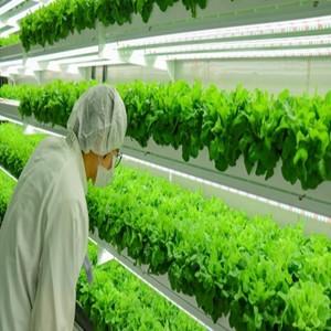 투자,재배,시스템