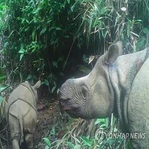 자바코뿔소,우중쿨,국립공원,서식지,새끼,마리