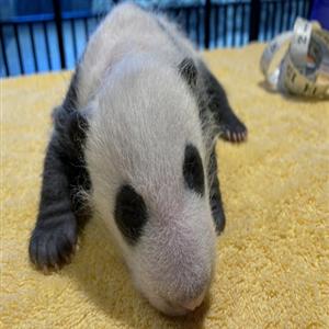 새끼,검사,미국,동물원