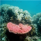 대보초,위기,산호초,바다,해수면,지금,이동,호주