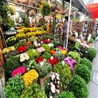 튤립,시장,꽃시장,암스테르담,현지인,오래,가게