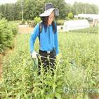노출,농약,인지기능,저하,위험,연구팀,연구결과