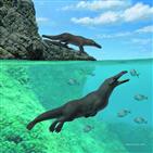 고래,화석