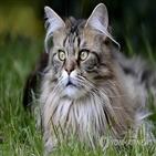 호주,고양이,살처분,야생,마리,계획,야생동물,위협