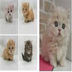 고양이,서비스,사람,시스템,민박,일본,사례비,애완동물