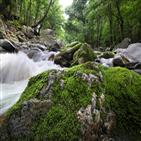 계곡,구천동,어사길,안심대,바위,초록빛,이름,물소리,다리,자연