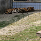 조성,동물감옥,대구대공원