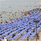 축제,여름축제,체험,일대,강릉