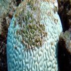 호주,산호,영향,기후,극단,상승,현상