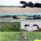 정일우,뿔논병아리,촬영,도로,둥지