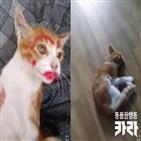 고양이,동물,카라,영상,학대,측은,대한,단체
