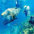 케언스,산호초,코스트,골드,공원,리프,풍경,동물,군락,바다