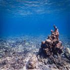 산호초,산호,물고기,파랑비늘돌돔,개체,건강,소리,주변
