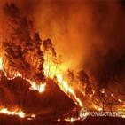 나무,산불,연료,피해