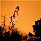 산불,호주,코알라,하늘,사태