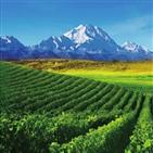 와인,닝샤,중국,지역,세계