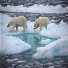 얼음,북극,연구팀,해빙,결과,북극해