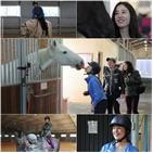 승마,박은혜,맥시무스,이지안,백마