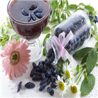 열매,추출물,아리바,식약처,개별인정