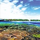 산호초,산호,생물,지구온난화,탄소,에너지,황록공생조류,석회석