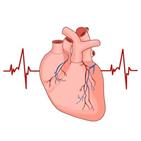 부정맥,코로나19,환자,심장