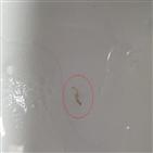 발견,유충