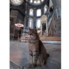 글리,성소피아,터키,고양이
