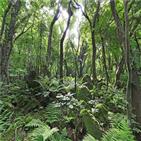 숲길,나무,바위,삼다수,제주,덕분,삼나무,뿌리,용암,공장
