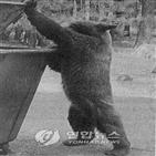 흑곰,침입