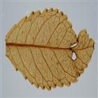 식물,나뭇잎,대기,농도,화석,기온