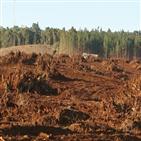 브라질,파괴,아마존,삼림