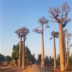 마다가스카르,산림,유네스코,생물다양성,주마