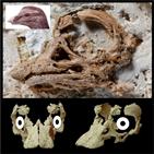 공룡,두개골,사우르,화석,배아