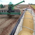 수확량,농산물,브라질,올해