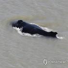 고래,악어,호주