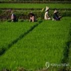 경작지,인도네시아,식량,사업,개발,장관,대통령,조코위