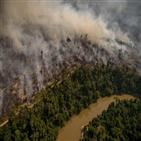 브라질,삼림,아마존,열대우림,면적
