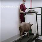 머스크,돼지,이식,공개,인간,두뇌,전기