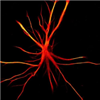 성상세포,수면,칼슘,뉴런,신호,연구
