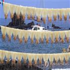 오징어,관측센터,가격,생산량